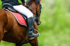 Closeup för hästridning Royaltyfri Bild