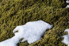 Closeup of fragile Icelandic moss Stock Photo