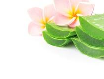 Closeup fresh aloe vera slice with plumeria on white background, Stock Image