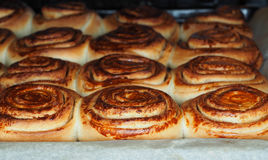Closeup of fresh baked cinnamon buns Royalty Free Stock Images