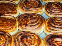 Closeup of fresh baked cinnamon buns after baking in oven. With egg yolk, on baking paper Stock Photos