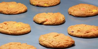 Closeup of Fresh Baked Cookies. Closeup view of freshly baked cookies on cookie sheet Royalty Free Stock Image