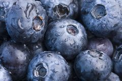 Closeup of fresh blueberries Royalty Free Stock Photography