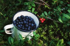Closeup of fresh blueberries. In an enamel mug Stock Photo