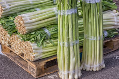 Closeup of a fresh bunch of leek at the farmers market, Allium a Royalty Free Stock Image