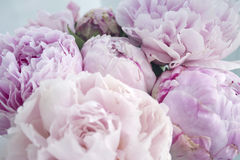 Closeup fresh bunch of pink peonies, peony flowers. Card, for wedding. Closeup fresh bunch of pink peonies peony roses flowers, Pastel floral wallpaper. Card royalty free stock photography