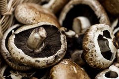 Closeup of fresh bunch of portobello mushroom Royalty Free Stock Images
