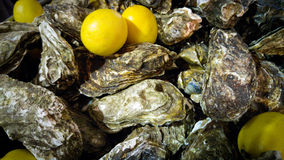 Closeup of fresh closed oysters and ripe lemons. Closeup shot of fresh closed oysters and ripe lemons Royalty Free Stock Images