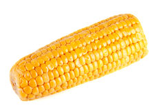 Closeup of fresh corn Stock Image