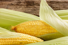 Closeup fresh corn cobs. Royalty Free Stock Images