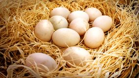 Closeup Fresh Duck`s Eggs in Haystack Basket in the Farm. Closeup Fresh Duck`s Eggs in Haystack Basket Stock Photography