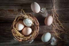 Fresh and ecological eggs from the henhouse Stock Photos