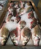 Closeup fresh fish Royalty Free Stock Image