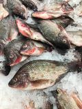Closeup fresh fish in supermarket, raw food concept, Photo with. Mobile phone Stock Photo