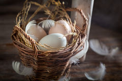 Fresh free range eggs from the henhouse Royalty Free Stock Images