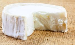 Closeup of fresh French goat`s cheese. Stock Image