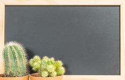 Closeup fresh green cactus plant on blurred blackboard textured background with copy space Stock Photography