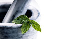 Closeup of fresh green mint on a pestle Stock Images