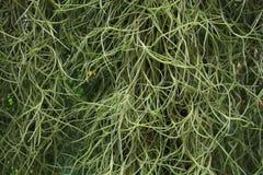 Closeup fresh green plan abstract Stock Photo