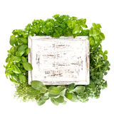 Closeup of fresh herbs with wooden board royalty free stock photos