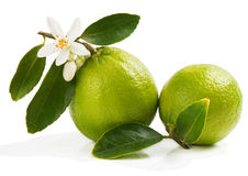 Closeup of fresh limes Royalty Free Stock Images