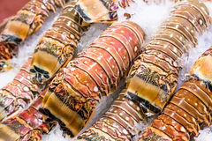 Closeup fresh lobster tails Royalty Free Stock Images