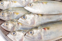 Closeup fresh mackerel fish Royalty Free Stock Photos
