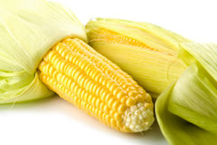 Closeup of fresh maize corns isolated Royalty Free Stock Images