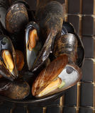 Closeup on fresh mussels Royalty Free Stock Photography