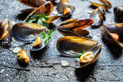 Closeup of fresh mussels cooking with parsley and garlic Stock Photography