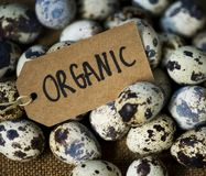 Closeup of fresh organic quail eggs Royalty Free Stock Photo