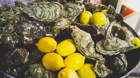 Closeup of fresh oysters and lemons lying in metal bucket. Closeup photo of fresh oysters and lemons lying in metal bucket Royalty Free Stock Photo