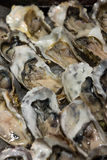 Closeup fresh oysters in row Stock Photos