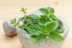 Closeup fresh peppermint leaves in the white mortar with pestle Royalty Free Stock Image