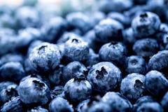 Closeup the  fresh picked blueberries. Closeup fresh picked blueberries fruit Royalty Free Stock Images