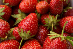 Closeup of fresh picked strawberries Royalty Free Stock Photography