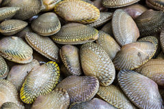 Closeup fresh raw Surf clam background. Royalty Free Stock Images