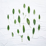 Closeup fresh sage leaves on white wooden background . Alternat. Ive medicine fresh salvia officinalis with flat lay stock photo