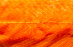Closeup fresh salmon red fish meat as food background texture Royalty Free Stock Images