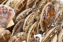 Closeup of fresh scallop sea shell at market Royalty Free Stock Photo