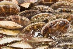 Closeup of fresh scallop sea shell at market Stock Photo