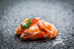 Closeup of fresh shrimp Royalty Free Stock Images