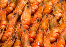 Closeup fresh shrimp in row Royalty Free Stock Image