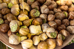 Closeup of fresh snails with parsley sauce lying on dish Royalty Free Stock Photography