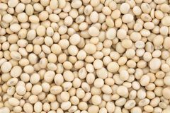 Soya Bean. Closeup of fresh soya bean Royalty Free Stock Photography