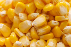 Closeup of fresh sweet yellow corn seeds Royalty Free Stock Image