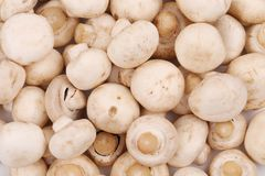 Closeup of fresh tasty champignon mushrooms. Stock Photo
