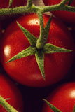 Closeup of fresh tasty red tomatoes. Healthy food or italian foo Royalty Free Stock Photography