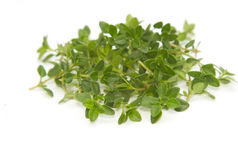 Closeup fresh thyme,spice Royalty Free Stock Images