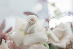 Closeup fresh white roses flower with blurred background.  royalty free stock photo